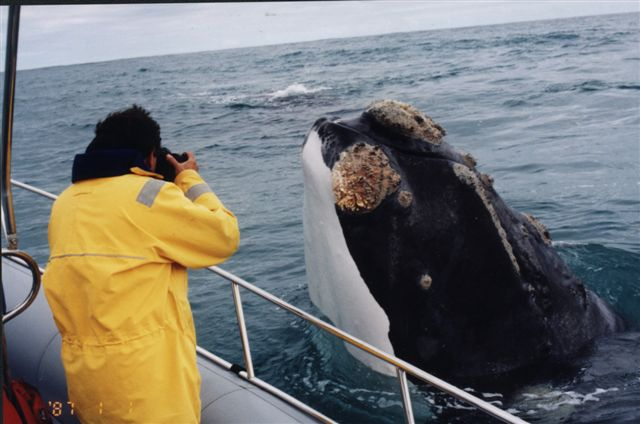 Best Whale Watching Tour For Birds In Southern California