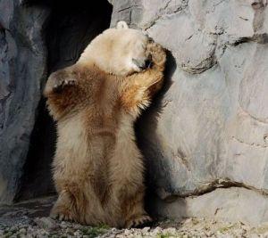 """Alas, poor Yogi.  I knew him.  He was a bear of infinite pic-a-nic baskets."""