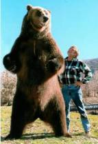 One of these men is, in fact presidential bear Teddy Roosevelt.  Which one?  The answer might just surprise you!